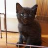 4月4日生まれの子猫ちゃん♪(ほぼ黒猫)
