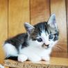 4月3日生まれの子猫ちゃん♪ サムネイル2