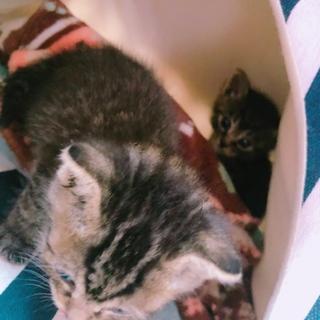 急遽!まだ生後2週間の子猫
