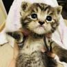 急遽!まだ生後2週間の子猫 サムネイル3