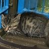 助けて下さい!2ヶ月くらいの仔猫です。 サムネイル4