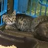 助けて下さい!2ヶ月くらいの仔猫です。 サムネイル5