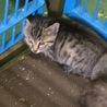 助けて下さい!2ヶ月くらいの仔猫です。 サムネイル6
