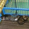 助けて下さい!2ヶ月くらいの仔猫です。 サムネイル7