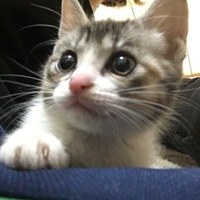 生後半年にならない子猫