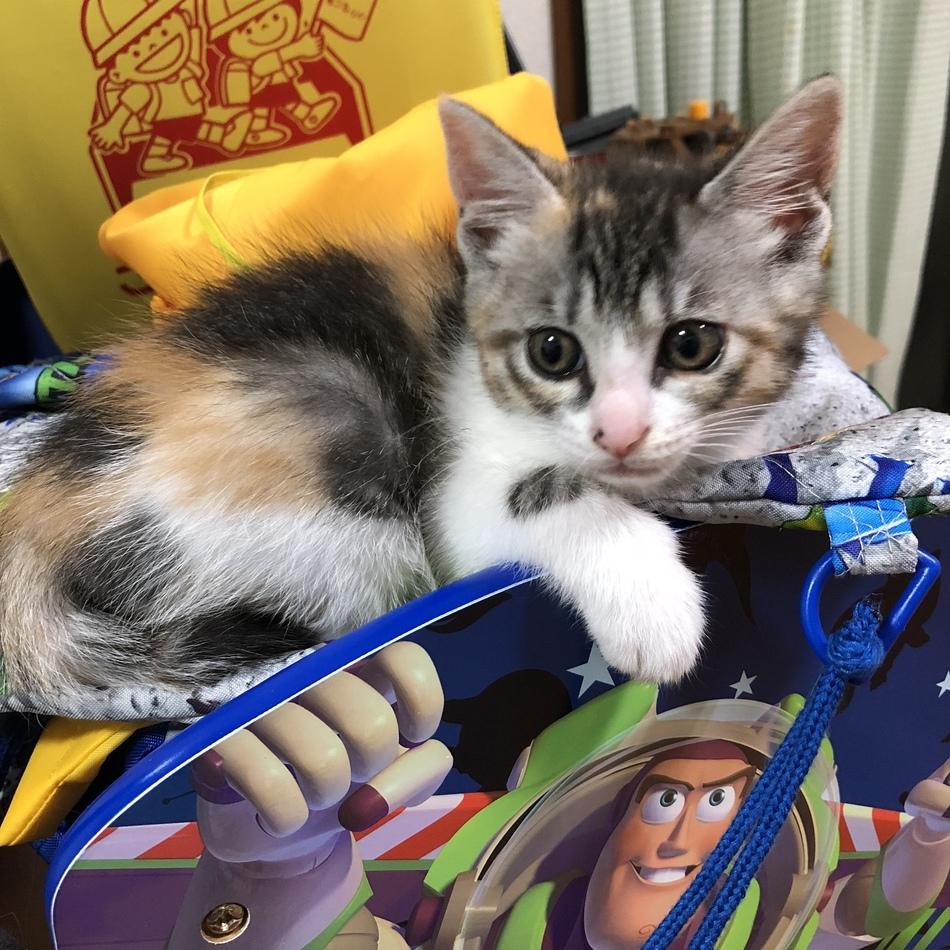 生後半年にならない子猫のカバー写真