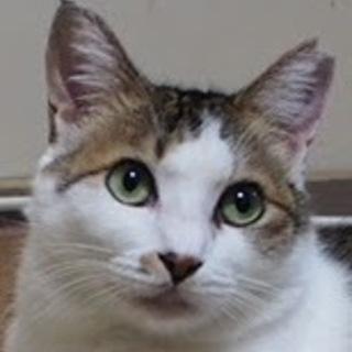 気品の美猫!孤高のレディ・フィーネ