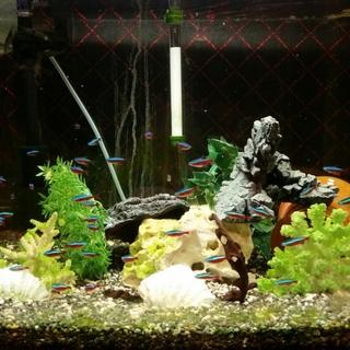 熱帯魚(水槽セット含む)