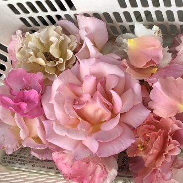 咲いて3日 摘花対象 次に咲く花の為に