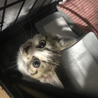 縫いぐるみの様な可愛い子猫ちゃん♡