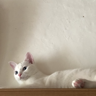 マルコも本棚の上が好き