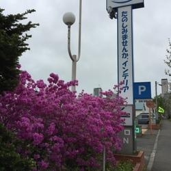 飼い主の休日 in 札幌