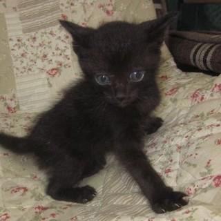 4/11日生まれの猫ちゃん2匹の里親募集します。