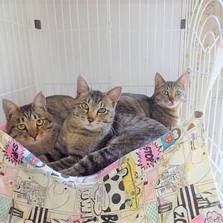 ☆沢山の猫達がお迎えを待っております☆