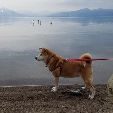 猪苗代湖にて