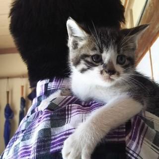 子猫の里親さん探しています