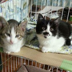 4年越しの苦労、ママ猫捕獲、子猫保護