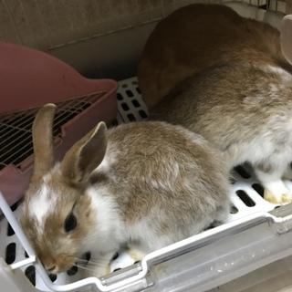 子ウサギ☆