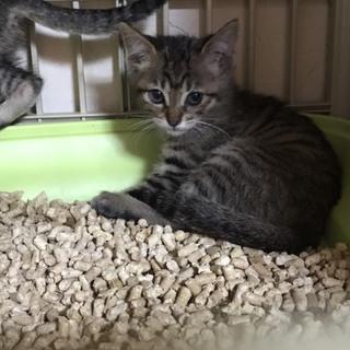 可愛いキジ猫三姉妹☺2