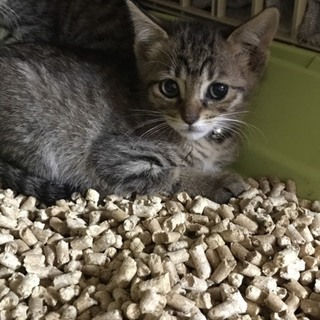 可愛いキジ猫三姉妹☺3
