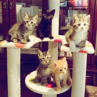 長毛美猫ママとカワイイ元気な5兄妹生後2カ月