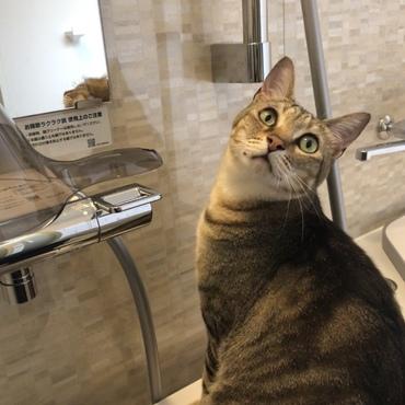 リフォーム風呂で、なんだ?なんだ?