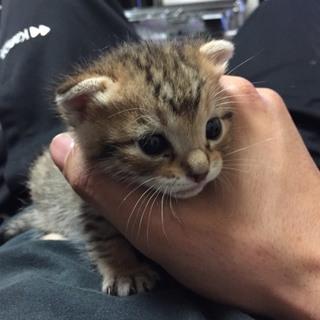 保護猫です。 2件交渉中 一時募集停止