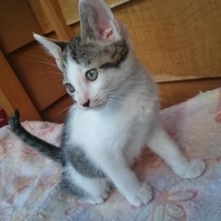 生後約2ヶ月子猫男の子