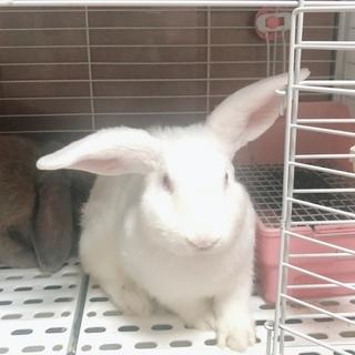 ウサギの里親さんを募集中です!