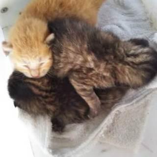 急募!庭に産み捨てられた子猫3匹