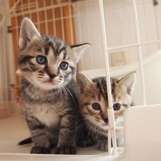 美猫子猫兄妹「ピース」♪