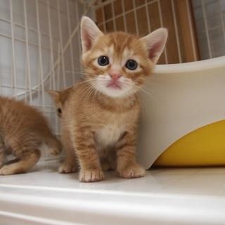 美猫兄妹「ハーツ」♪