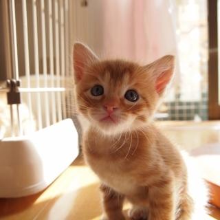 美猫兄妹「ライム」♪