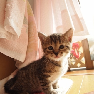美猫子猫兄妹「エリザ」♪