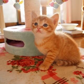 美猫子猫兄妹「セシル」♪