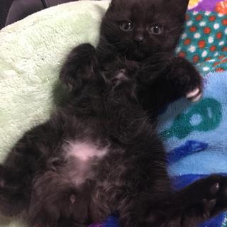 黒長毛のフワフワ猫ちゃん!