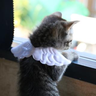 おひざのり大好き!天使の子猫マリー