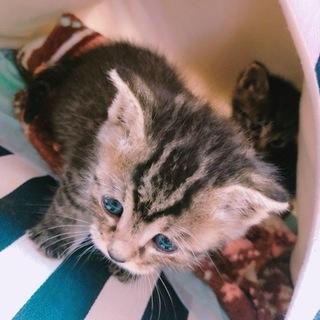 約2週間の子猫