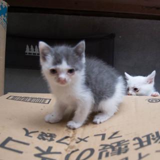 一人暮らしの高齢者の物置で子猫が生まれました。