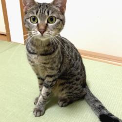 猫の譲渡会 名古屋市港区 みなと猫の会 サムネイル1