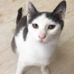 猫の譲渡会 名古屋市西区 みなと猫の会 サムネイル1