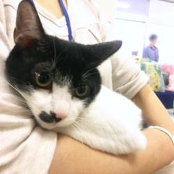 猫の譲渡会 名古屋市西区 みなと猫の会 サムネイル3