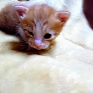 かわいい子猫の里親さん募集です。