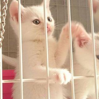 まっ白きれい女子「ようこ」元気に成長中!