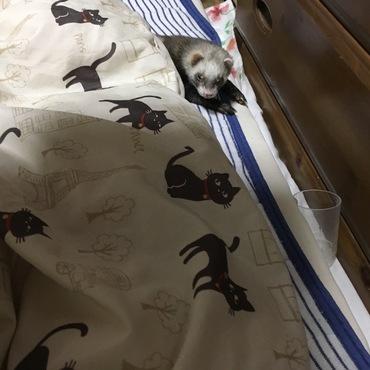 お布団から出てきたけど、まだ眠そう