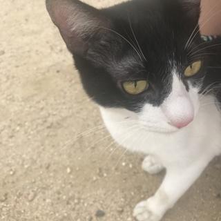 黒白の小さめ猫ちゃん♪人懐っこいです