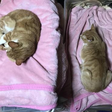 ヴァネッサとジェニファーのお気に入りのピンクのベッド
