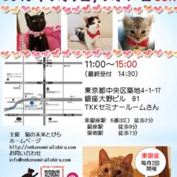 ★東京・東銀座徒歩2分★猫の未来とびら譲渡会★