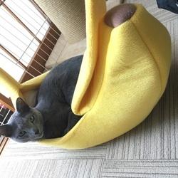 子猫を売らない日本へ