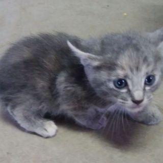 生後2カ月の子猫